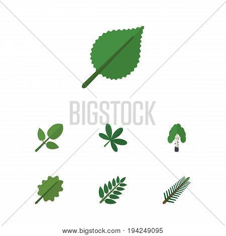 Flat Icon Bio Set Of Alder, Linden, Acacia Leaf And Other Vector Objects. Also Includes Forest, Alder, Oaken Elements.