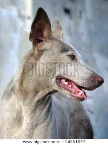 Portrait Of Vagrant White Dog Expresstion Feeling