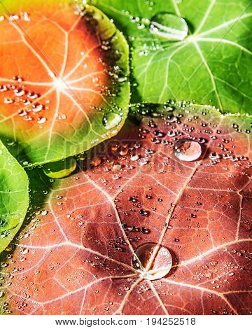 a background from green dewy leaves - macro
