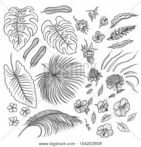 Vector sketch black and white set of isolated elements. The leaves of tropical plants and exotic flowers buds. Graphic outline drawing collection herb and vegetation monsoon rainforest