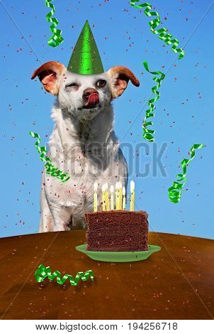 a chihuahua with a piece of cake on a plate with candles and streamers for birthday card or other themed products