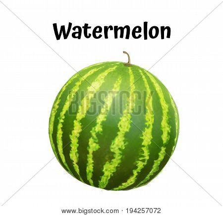 Watermelon realistic ripe. Vector illustration. Watermelon. Watermelon