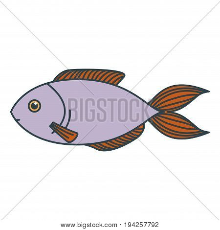 colorful silhouette of lilac trout fish vector illustration