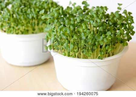 Broccoli sprouts growing in soil in white pots.