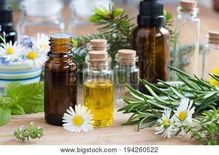 Bottles of essential oil with a selection of flowers and herbs on a wooden background - melissa (lemon balm) rosemary thyme spruce