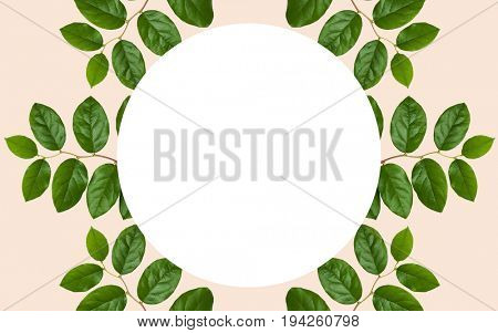 nature, organic and botany concept - green leaves around white blank round space over beige background