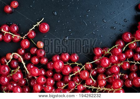 Red ripe currants on a dark background. Droplets of water