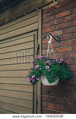 A large ball of dark pink petunias. Basket of fowers decorated the wall. Colored summer flowers hanging in a basket
