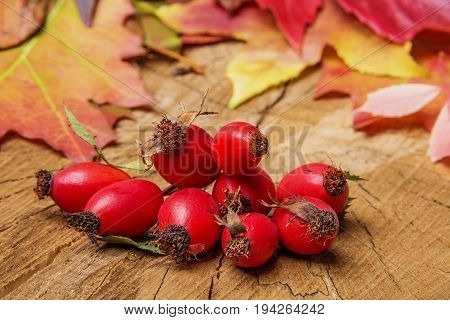 red rosehips and autumn leaves close up