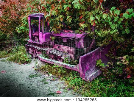 Old fashion antique worn rusted construction full track pink tractor among green trees. Abandoned tractor vehicle agricultural industry machine crawler tractor blade Abstract tractor background