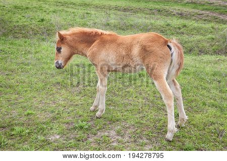 young cute colt on the green meadow