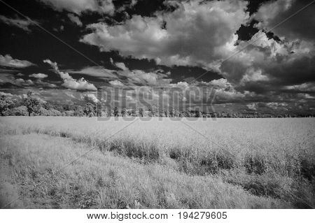 infrared photography - summer landscape with cloudy sky