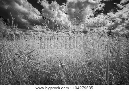 infrared photography - summer meadow with wild flowers