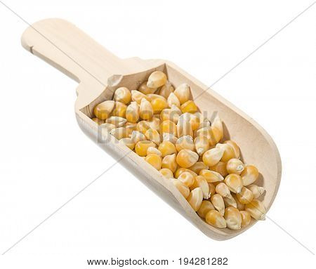 Wooden scoop of dried corn isolated on white background.