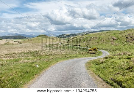 Scottish single track road with broom on a moor in the highlands, uk