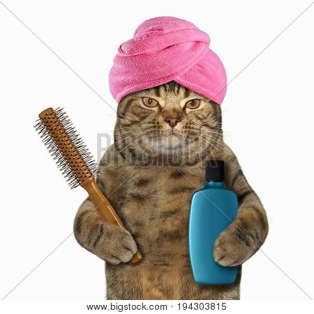 The cat in a turban is holding a hairbrush and a bottle of shampoo. White background.