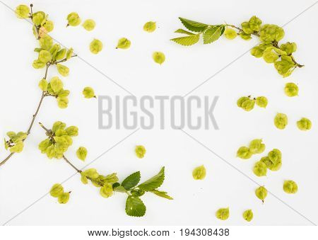 Elm Seeds And Twigs