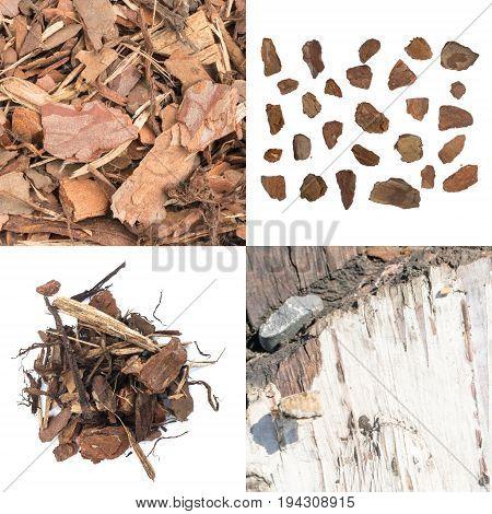 Bark Texture Set
