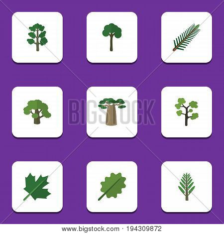 Flat Icon Nature Set Of Evergreen, Tree, Forest And Other Vector Objects. Also Includes Alder, Forest, Willow Elements.