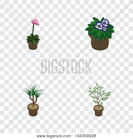Isometric Houseplant Set Of Fern, Flowerpot, Grower And Other Vector Objects. Also Includes Flower, Flowerpot, Houseplant Elements.