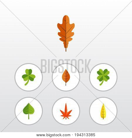 Flat Icon Foliage Set Of Aspen, Hickory, Maple And Other Vector Objects. Also Includes Oaken, Alder, Leafage Elements.