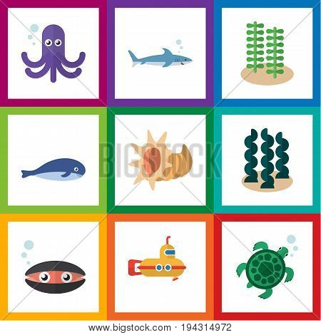 Flat Icon Nature Set Of Cachalot, Seaweed, Periscope And Other Vector Objects. Also Includes Alga, Turtle, Tortoise Elements.