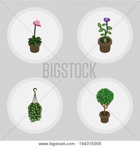 Isometric Houseplant Set Of Grower, Blossom, Tree And Other Vector Objects. Also Includes Blossom, Hanging, Pot Elements.