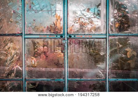 Misted up glass door into tropical glasshouse