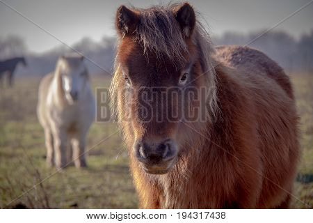 Young Pony so cute and fluffy standing with other ponies out of focus in background