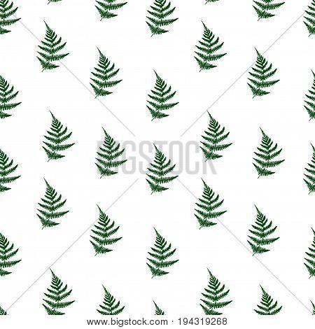 Fern Leaves Seamless Pattern Background. Vector Illustration Seamless Floral Pattern. Nature Organic
