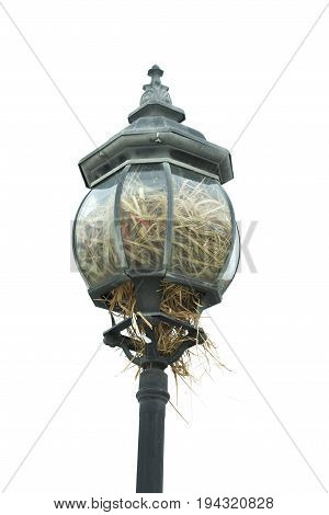 A lot of straw in the lamp. Bird's nest in the lamp isolated on white background.