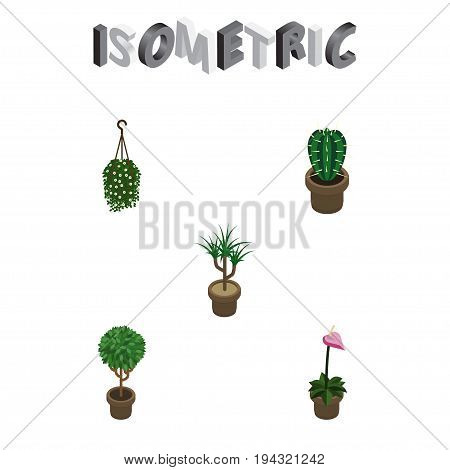 Isometric Houseplant Set Of Peyote, Houseplant, Tree And Other Vector Objects. Also Includes Cactus, Hanging, Botany Elements.