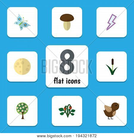 Flat Icon Bio Set Of Champignon, Lunar, Tree And Other Vector Objects. Also Includes Moth, Sparrow, Moon Elements.