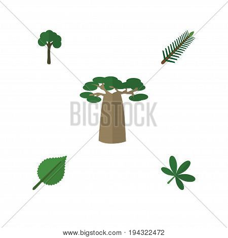 Flat Icon Ecology Set Of Baobab, Evergreen, Linden And Other Vector Objects. Also Includes Baobab, Tree, Alder Elements.
