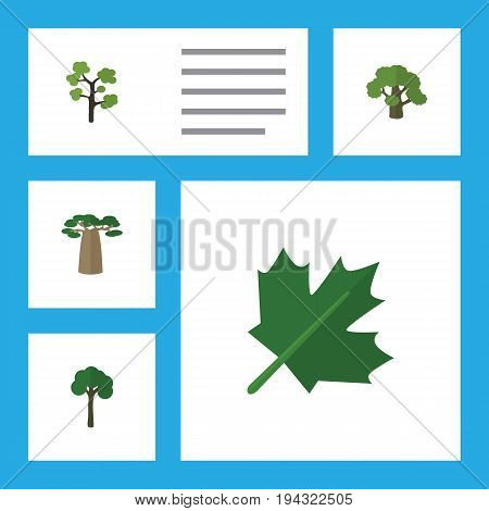 Flat Icon Nature Set Of Garden, Tree, Evergreen And Other Vector Objects. Also Includes Baobab, Timber, Oak Elements.