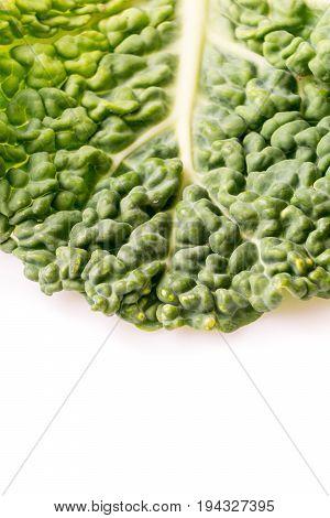 Close up of organic dark green savoy cabbage leaf