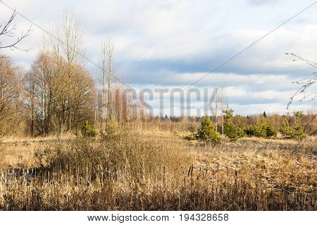 Beautiful landscape with field, fir trees and clouds on a sunny day.