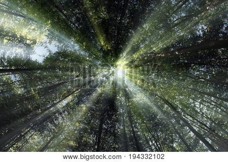Bright sun rays shining through the crowns of trees