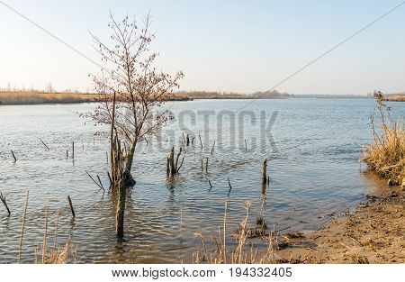 Bare and weathered branches above the water surface in a flooded area next to a wide Dutch river. It is in the end of the winter season.