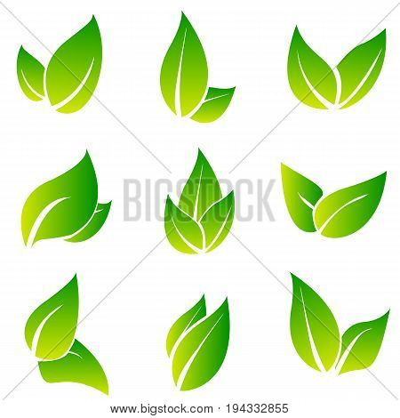 Leaves icon vector set isolated on white background. Various shapes of green leaves of trees and plants. Elements for eco and bio logos. Collection of green symbols isolated on a white background. Ecology symbol