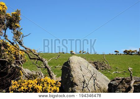 Sheep Grazing In The Torr Head Area