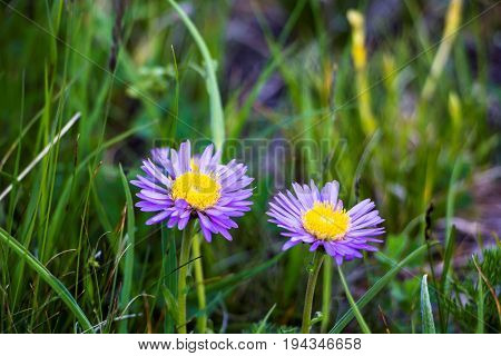 Beautiful flowers of blue color on a glade in a grass, plants in the wild nature