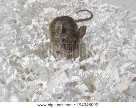 mouse and paper - a destruction concept