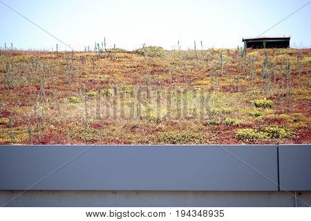 A roof edge planted with soil plants.