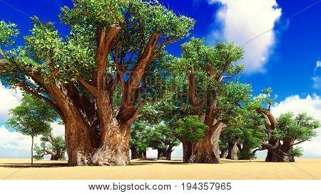Awesome baobabs in African savannah 3d rendering
