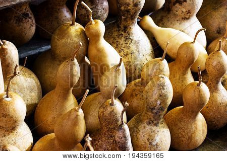 Dried Pumpkins For Traditional Turkish Lamps