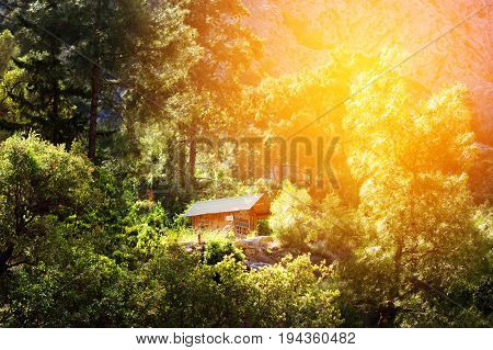 Wooden House In A Forest, Active Vacations