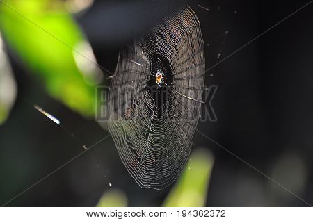Little spider in his web on sunlight. In spider web in the grass little spider waiting next victim
