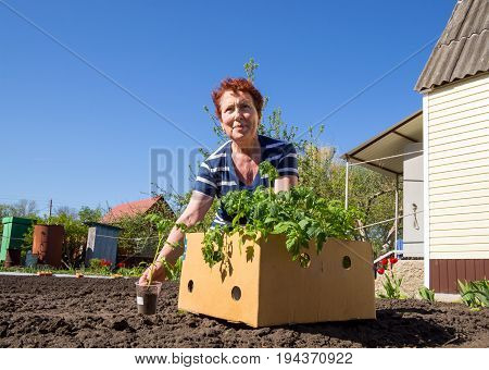 Voronezh, Russia - May 04, 2017: Mature woman sitting near a box with seedlings