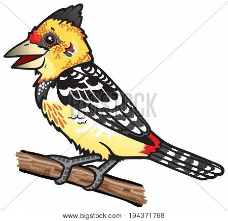 Cartoon drawing of a cute Crested Barbet which is a type of colorful African bird